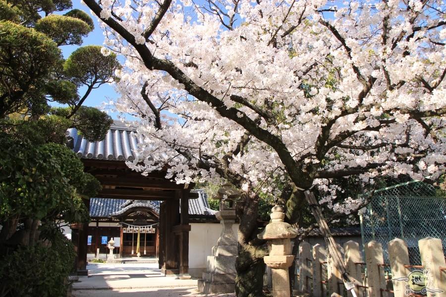 日部神社の桜
