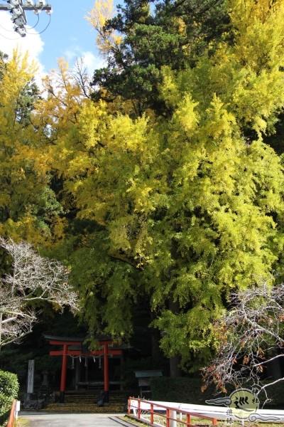 岩戸落葉神社の黄葉