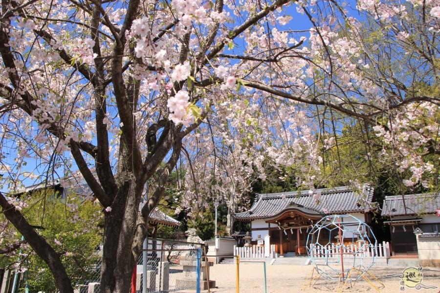 大坂山口神社 逢坂 桜